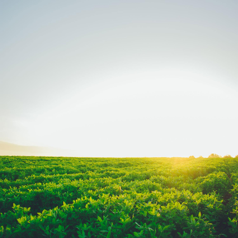 Sunny farm field